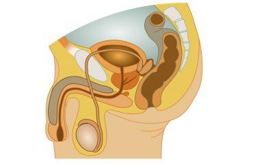 ανδρικό γεννητικό σύστημα